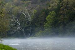 Spring Fog on Clarion River (D200) (ssepanus) Tags: sepan pa pennsylvania clarion clarionriver river nikon d200 fog cookforest park statepark
