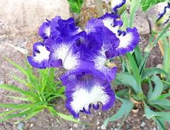 Vollendet (michaelschneider17) Tags: blüten pflanzen farben natur schönheit
