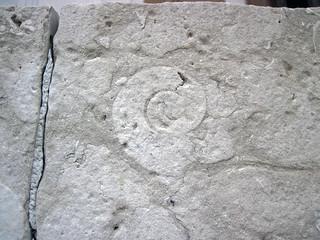 Fossiliferous limestone (Columbus Limestone, Middle Devonian; Sullivant Quarry, Columbus, Ohio, USA) 89