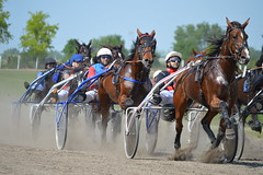 DSC_3646 (emina.knezevic) Tags: trotters racing harness harnessracing horses equestrian equestrianphotography animaphotography hippodrome
