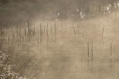180520_014 (123_456) Tags: parkdehogeveluwe hoge veluwe nederland gelderland otterlo hoenderloo schaarsbergen