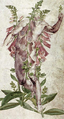 altered: digitalis (hoolia14oh4) Tags: altered collage digital art botanical anatomy poison heart michelangelo nude