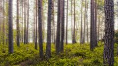 Summer Forest (MattiBo) Tags: scandinavia suomi sunrise summer tranquil nature landscape lake colors travel beautiful nikon nikkor nuuksio maisema landscapes järvi helsinki golden finland forest foliage d750 outdoor
