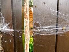 Hanging on by a thread! (HWW!) (Nanny Bean) Tags: webwednesdays cobweb spider