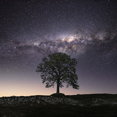 Tree of life (Jay Daley) Tags: astro milkyway stars universe night nightphotography nikon d810 longexposure