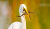 Hunt (agnish.dey) Tags: birding bird birdwatching wildlife wadingbird birdsofprey egret bokeh sunlight florida frog water naturallight nature naturephotograph nikon d500 animalplanet