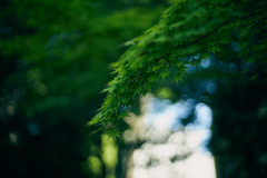 Green wind/緑の風 (ryo_ro) Tags: ilce7 a7 sony lomo lomography jupiter 50mm f15 zenit green