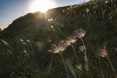 Opret kobjælde - Den sidste sol