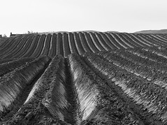 Furrows BW (alisonsage1) Tags: plough furrows earth agriculture soil fields