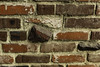 Brick Wall (Thad Zajdowicz) Tags: zajdowicz pasadena california availablelight lightroom canon eos 5dmarkiii 5d3 dslr digital usa ef50mmf12lusm 50mm primelens architecture outdoor outside wall warm tones color red colour brick pattern shapes texture abstract rough