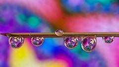 #DROPS - 5195 (YᗩSᗰIᘉᗴ HᗴᘉS +15 000 000 thx) Tags: drop drops macro droplet color corlour couleur vivid colorful hensyasmine namur belgium europa aaa namuroise look photo friends be wow yasminehens interest intersting eu fr greatphotographers lanamuroise tellmeastory flickering