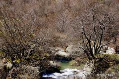 Le Gour_DSC3037 (hervv30140) Tags: paysage nature rivière eau chute gour piscine arbre forêt rocher printemps avril isolé perdu unique