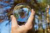 Copper Beech Tree (Scouse Steve) Tags: bluebells crystalball ferns glassball millomparkwoods millomwoods