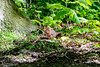 Hold on to your nuts! (ThomasMaribo) Tags: red squirrel animal nature lolland denmark danmark maribo wildlife tamron nikon sciurus vulgaris mammal