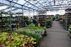 Lowes Coralville Store Visit 5-9-18 02 (anothertom) Tags: coralvilleiowa lowes store shopping retailhomeimprovement plants lowesgardencenter 2018 sonyrx100v
