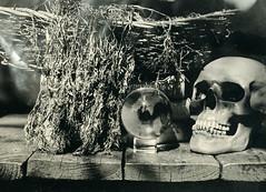 Look at yourself (Rosenthal Photography) Tags: treu nasplatte blume anderlingen fkd13x18 ferrotypie 13x18 leaslandscape7 schädel kollodium familie lloydspecialextrarapidrectilinear5x8 garten tintypie städte kristallkugel glaskugel totenkopf 20180502 analog stilleben dörfer siedlungen yourself selfportrait portrait garden skull crystalball fkd llyod special extra rapid rectilinear 5x8 tintype aluminium aluminotype collodion wetplate wet plate f113 3sec