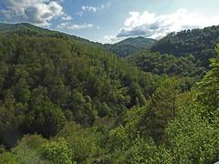 18050718740valtrebbia (coundown) Tags: gita tour statale stradastatale 45 ss45 valtrebbia trebbia natura boschi verde fiume