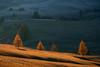 Fading Light (ChristianHoiberg) Tags: nature outdoors dolomites adventure sunset siusi alps intimate telezoom autumn fall light trees landscape