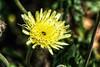 Flower Power (Fernando Two Two) Tags: flor fiore flower fleur yellow amarillo lemon groc