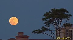 April Full Moon over the Gulf Coast (Pacht1111) Tags: moon orange full