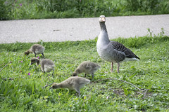 "mothergoose2 • <a style=""font-size:0.8em;"" href=""http://www.flickr.com/photos/157241634@N04/40029058630/"" target=""_blank"">View on Flickr</a>"