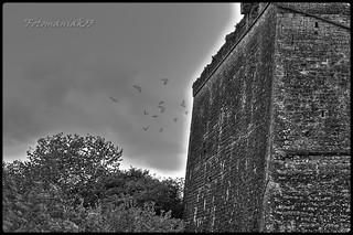 oiseaux fantômes