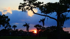 End of April Sunset (Jim Mullhaupt) Tags: sunset sundown dusk sun evening endofday sky clouds color red gold orange pink yellow blue tree palm outdoor silhouette weather tropical exotic wallpaper landscape nikon coolpix p900 jimmullhaupt manateecounty bradenton florida cloudsstormssunsetssunrises photo flickr geographic picture pictures camera snapshot photography nikoncoolpixp900 nikonp900 coolpixp900
