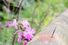 Spring flowers ({rebecca.evans}) Tags: spring nature natureycrap plant flower flowers 50mm nikon d3200 pastel soft