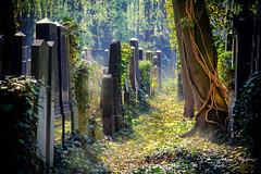 JS--95 (johan strijckers) Tags: berlin jewish cemetery overgrown