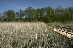 IMGP14129 (Łukasz Z.) Tags: lubelskie rzeczpospolitapolska poleskiparknarodowy nationalpark sigma1750mmf28exdchsm pentaxk3