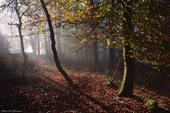 Lights in the Forest (Hector Prada) Tags: forest bosque otoño autumn luz light fog niebla mist bruma contraluz backlight hojas leaves atmósfera mood nature naturaleza woods paísvasco euskalherria basquecountry