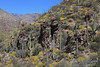 Arizona - Sabino Canyon (Michael.Kemper) Tags: canon eos 6d canoneos6d canonef2470f4lisusm ef 2470 f4l f4 l is usm voyage travel travelling reise usa us united states america vereinigte staaten von amerika american southwest amerikanischer südwesten arizona az sabino canyon sabinocanyon phoneline trail hike hiking wanderung wandern randonnée randonnee santa catalina mountain mountains berge frühling spring kaktus kaktee kakteen cactus cacti saguaro saguaros coronado national forest tucson ocotillo ocotillos