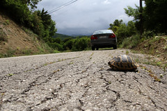 On the Greek Country Roads... (GeorgeKats) Tags: turtle road roadtrip greece greek greekcountryroads hellas epirus