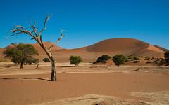 Sossusvlei, Big Mama dune (RickG59) Tags: africa namibia sossusvlei sand dunes sky blue dry tree
