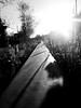 rail (Darek Drapala) Tags: railway rail railroad reflection reflects bw blackwhite blackandwhite sun silhouette sunset sunrise lumix light blinking panasonic poland polska panasonicg5 nature industrial