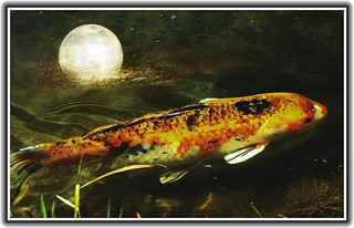 Sonnenberg Gardens & Mansion ~ Historic Park ~ Canandaigua NY  ~ Fish Pond under the Moon