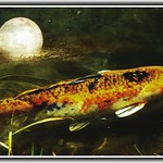 Sonnenberg Gardens & Mansion ~ Historic Park ~ Canandaigua NY  ~ Fish Pond under the Moon thumbnail