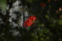 DSC_0393 (bratispixl) Tags: fotosafari oberbayern germany bratispixl tele lichtwechsel schärfentiefe fokussierung bergwelt spot outdoor indoor architektur landschaft grat hügel wasser sonnenfotografie see flus tiere insekten nature nigth day spuren blumen wolken video chiemsee windspuren atemluft working