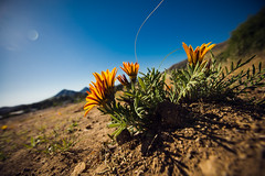 hilltop flowers [Day 3422]
