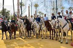 Feria del Caballo de Jerez ... (Raquel Borrrero) Tags: feria del caballo jerez de la frontera cádiz horses horse rider jinetes spain españa andalucía people
