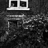 Comme un jardin miniature... (woltarise) Tags: jardin miniature secret arbustes fenêtres plantes montréal ricohgr