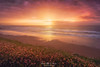 Pinky sunset (Mimadeo) Tags: beach flowers spring summer sea ocean grass sunset sun sky beautiful idyllic landscape vizcaya bizkaia euskadi basquecountry paisvasco spain sopelana sopela golden red pink waves sand shore