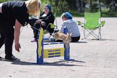 DSC_0155 (klawerjanina) Tags: bunnyjump bunny kani kanin kanihoppning kaniestekisat