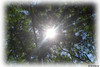 Hi Sun! (Guilherme Alex) Tags: tree leaves leaf nature natural life live living sun sunday saturday wee weekend brightness up mountains jungle high forest exploring day morning digitalcamera art dv100 adventure white frame picture countryside farfromthecity trip sunbeam sunlight yeah moment beautiful wonderful mountain