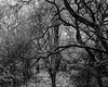 Hyons Wood (Jonathan Carr) Tags: ancient woodland rural northeast black white bw landscape trees light shadow monochrome largeformat 4x5 5x4 toyo45a