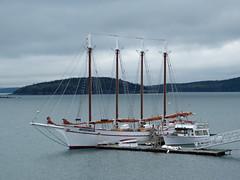 Margaret Todd Schooner - Bar Harbor (lucre101) Tags: maine margaret todd schooner bar harbor sailing sail boat eastcoast downeast atlantic sea tourist tour homeland indian beautiful
