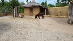 20180523_123833 (TheSlayerNL) Tags: wildlands emmen zoo dieren animals adventure wildlandsadventurezoo