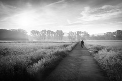 Into the morning light... (der LichtKlicker) Tags: freiburg2018 freiburg meadow landscape landschaft wiese weg path way road horizon horizont bäume field feld clouds wolken sonne sun sunrise sonnenaufgang fujifilm fuji x100f black white schwarz weiss mood stimmung morning light fog nebel licht schatten feldweg