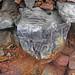 Pyrite atop chert nodule (Delaware Limestone, Middle Devonian; Emerald Parkway roadcut, Dublin, Ohio, USA) 3