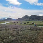 Iceland ~ Landmannalaugar Route ~  Ultramarathon is held on the route each July ~ Camp Site thumbnail